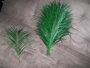 Palm Areca Fresh From the Wholesale Florist