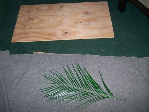Pressing Palm Areca